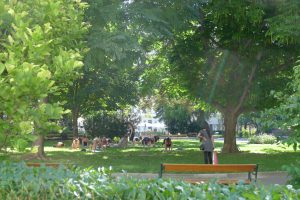 Yoga im Park - Bild 36